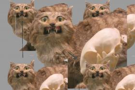 Торговый паттерн «прыжок дохлой кошки»
